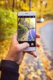 Bemannen Sie das Machen des Fotos des gelben Laubs im Wald im Herbst mit Telefon Stockfotos