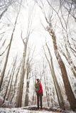 Bemannen Sie das Schauen zu Winterbaum ` s Spitze Lizenzfreies Stockfoto