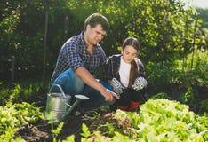 Bemannen Sie das Sitzen am Garten mit Tochter und das Beibringen ihr von horticultur lizenzfreie stockfotos