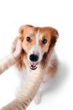 Bemannen Sie das Umarmen des border collie-Hundes, lokalisiert auf Weiß Lizenzfreie Stockfotografie