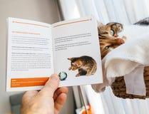 Bemannen Sie das Vorbereiten, mit Katzenlesebroschüre von Switzerla zu reisen lizenzfreie stockfotografie
