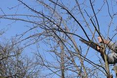 Bemannen Sie den Schnitt der Niederlassung eines Baums mit einer Säge Lizenzfreie Stockfotografie