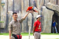 Bemannen Sie den Vogeltrainer mit dem Handeln des Trickpapageien auf Vogel ` s Show Lizenzfreies Stockfoto