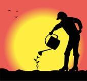 Bemannen Sie die Bewässerung einer kleinen Anlage Stockfoto