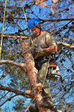 Bemannen Sie die Bindung eines Knotens auf einem Glied in einem Baum lizenzfreie stockfotos