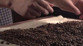 Bemannen Sie die Hände, die geringe Qualität ` s von verrosteten Kaffeebohnen sortieren stock footage