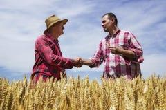 Bemannen Sie Erschütterung mit Landwirt und congrats Landwirt für guten Weizen Stockfotografie