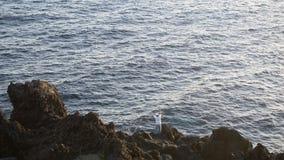 Bemannen Sie Fischen in den Felsen, Terceira, Azoren stockfotografie