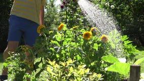 Bemannen Sie Hände mit sonnenblumen-Blumenblüte des blauen Wasserkanisterwerkzeugs Bewässerungsim Sommerzeitgarten 4K stock video footage