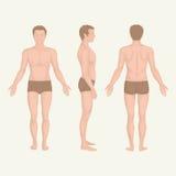 Bemannen Sie Körperanatomie, -front, -rückseite und -seite Lizenzfreies Stockfoto