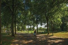 Bemannen Sie Reitfahrrad auf einer Straße im Schatten von belaubten Bäumen bei Sonnenuntergang in Weesp Stockbild