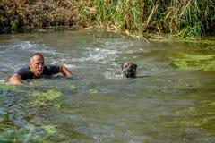 Bemannen Sie Schwimmen mit seinem Hund im glücklichen Hundeüberlebenswettbewerb 2016 stockfotografie