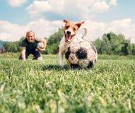 Bemannen Sie Spiel mit Hund auf der grünen Wiese Lizenzfreies Stockfoto