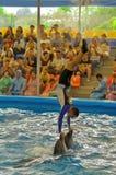 Bemannen Sie stehendes umgedrehtes auf Delphine an der Dolphine-` s Bucht in Phuket, Thailand Lizenzfreies Stockfoto