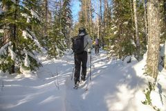 Bemannen Sie Wanderer mit dem Rucksack, der in schneebedeckte Landschaft des Winters Waldreist Active macht Konzept im Freien Url Stockfoto