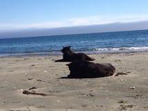 Bemannt die besten Freunde, die auf Strand sich entspannen Lizenzfreie Stockbilder