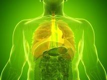 Bemannt Lunge lizenzfreies stockfoto