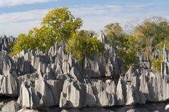 bemaraha de tsingy Стоковые Изображения