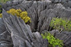 bemaraha de tsingy Стоковые Изображения RF