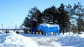Bemidji, MN - 8 FEB 2019: Several young men take photos by the statues, Paul Bunyan and Babe the Blue Ox in winter. Bemidji, MN - 8 FEB 2019: Several young men stock footage