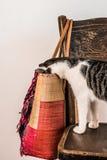 Bemoeiziek katje die in een zak piepen stock afbeelding