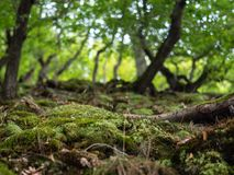 Bemost bos langs de Rheinsteig-sleep in Duitsland royalty-vrije stock foto
