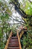 Bemost Bos van Gunung Brinchang, Cameron Highlands royalty-vrije stock afbeeldingen