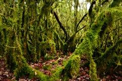 Bemost de herfstbos met bomen die door groen mos worden behandeld stock afbeelding