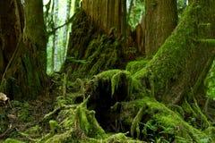 Bemost Forest Details stock foto's
