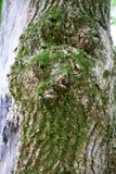 Bemost gezicht van een boom royalty-vrije stock foto