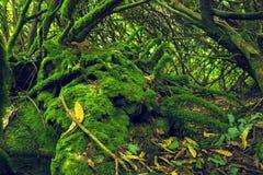 Bemost hout in Ierland stock afbeeldingen