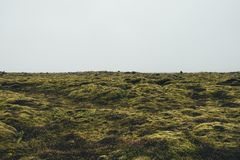 Bemost Landschap in IJsland Stock Afbeeldingen