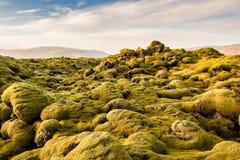 Bemost Lava Fields dichtbij Vik in IJsland stock foto