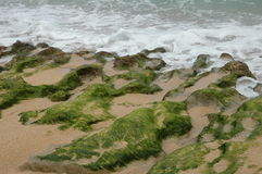 Bemost Strand stock fotografie