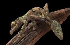 Bemoste blad-de steel verwijderde van gekko op wijnstok Royalty-vrije Stock Afbeeldingen