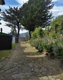 Bemoste bloem-gevoerde flagstonesteeg met wind-geworpen bomen in Puerto Natales, Patagonië Chili Stock Afbeeldingen