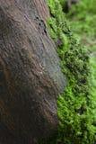Bemoste boom in het bos Stock Fotografie