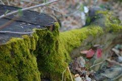 Bemoste boomboomstam in een bos stock foto's