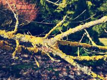 Bemoste boomboomstam stock afbeeldingen