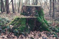 Bemoste boomstam in het hout Stock Afbeeldingen