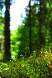 Bemoste bosvloer Stock Afbeeldingen