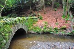 Bemoste brug over een Rivier Royalty-vrije Stock Foto