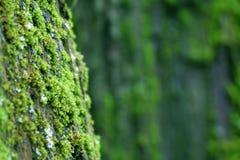 Bemoste dichte omhooggaand van de boomboomstam royalty-vrije stock foto