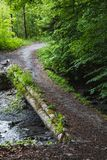 Bemoste groene vergankelijke brug in een bos dichtbij frutigen Royalty-vrije Stock Afbeeldingen