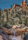 Bemoste Holdalingen van Bryce Canyon Stock Afbeelding