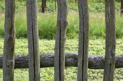 Bemoste houten omheining van de vijf pinnen in de barsten stock afbeeldingen