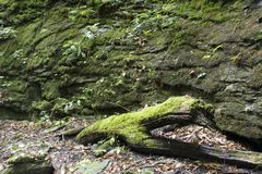 Bemoste logboek en rotsmuur stock foto's