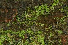Bemoste muur Royalty-vrije Stock Fotografie