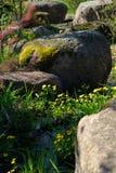 Bemoste rotsen in een Japanse tuin stock fotografie