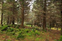 Bemoste rotsen in het bos royalty-vrije stock foto